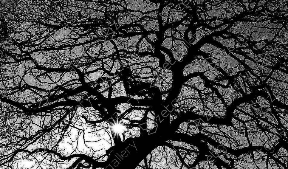 Black Tree, original B&W Analog Photography by Heinz Baade