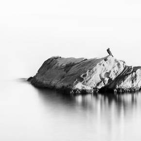 BIRD ON A ROCK, Large Edition 1 of 5, original Abstract Digital Photography by Benjamin Lurie