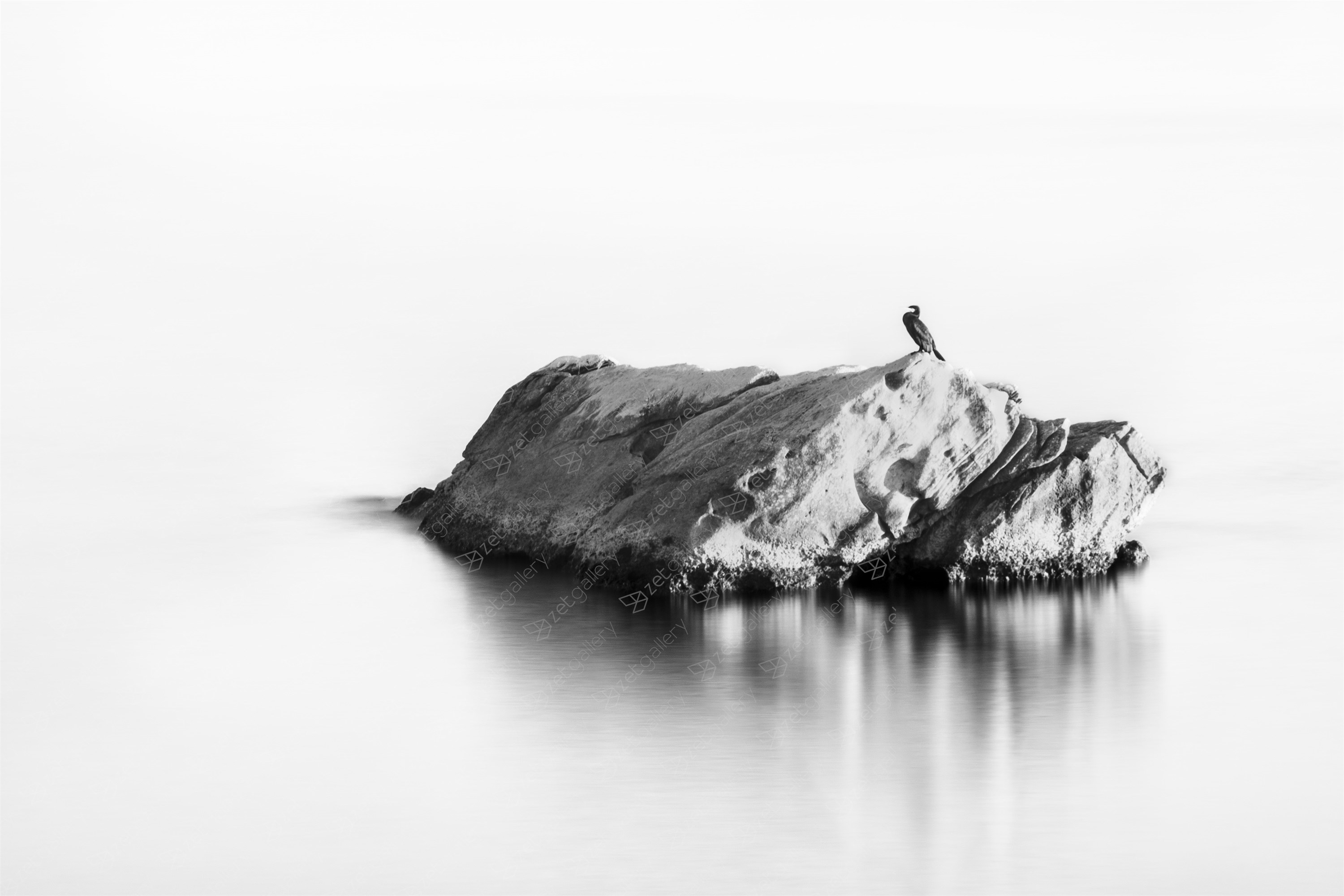 BIRD ON A ROCK, Extra Large Edition 1 of 3, original Abstract Digital Photography by Benjamin Lurie
