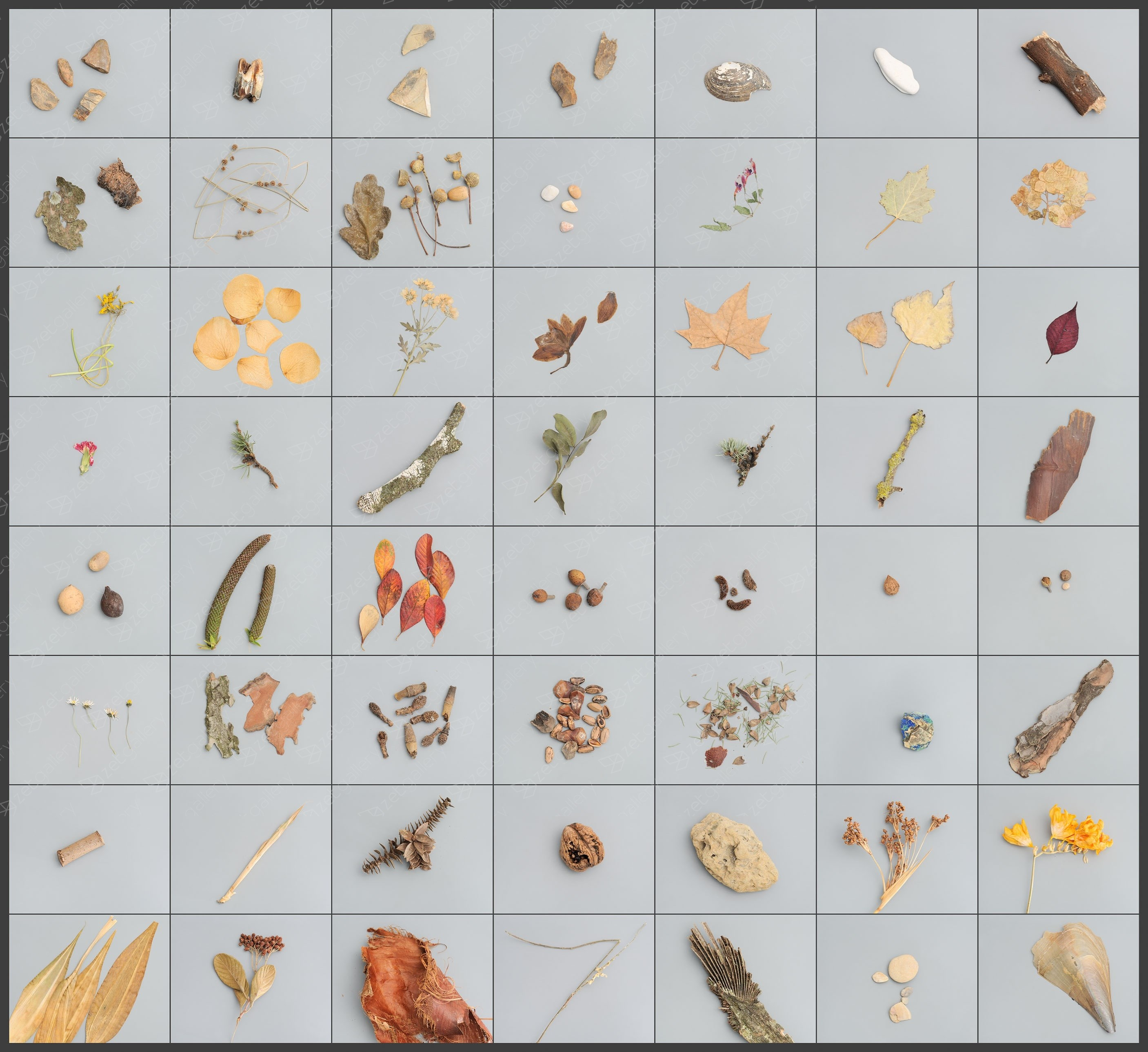 55 field collections of natural elements + 1(Portugal), original Nature Digital Photography by António Coelho
