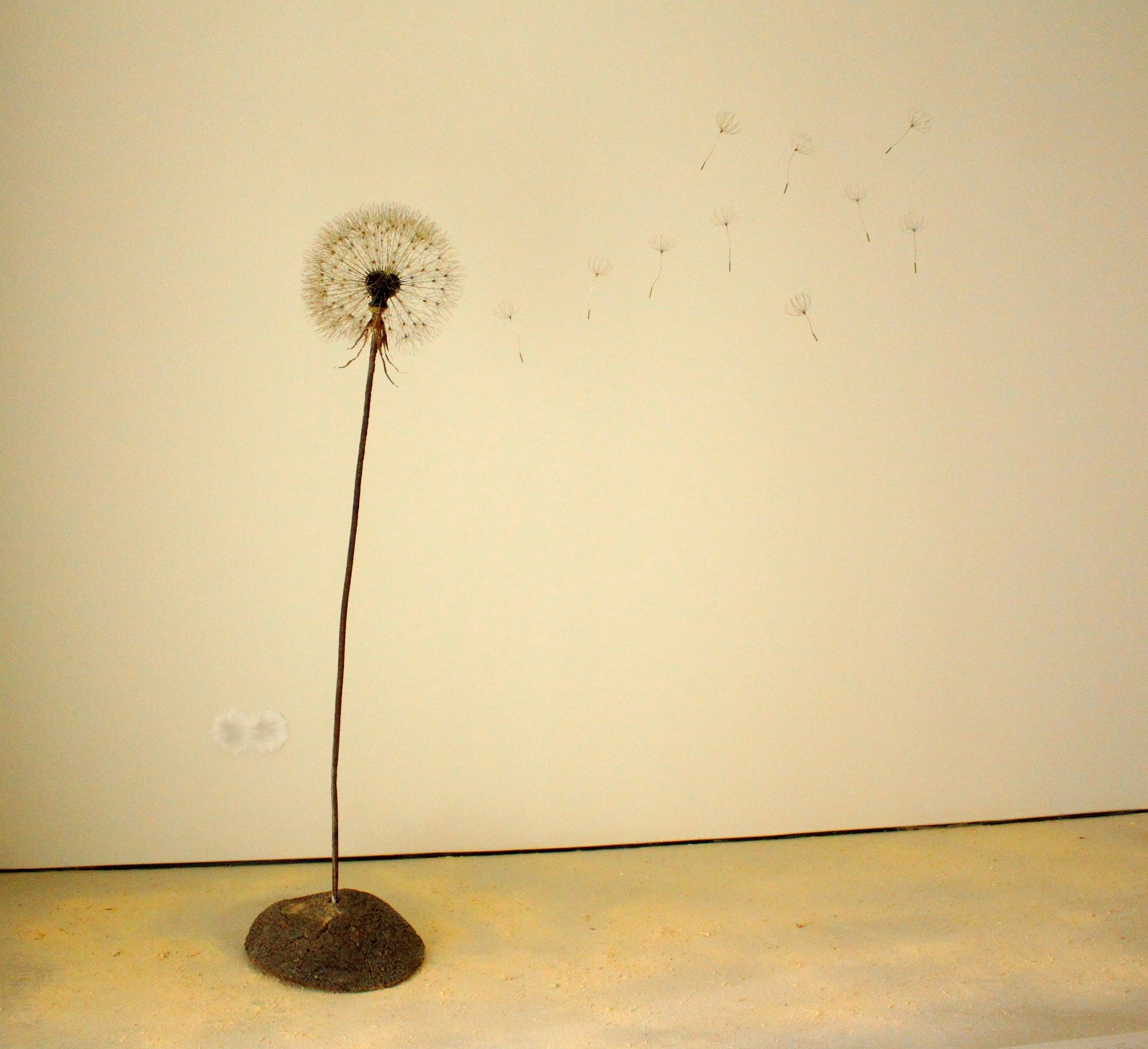 Taraxacum Officinale, original Nature Iron Sculpture by Arnold van Rossum