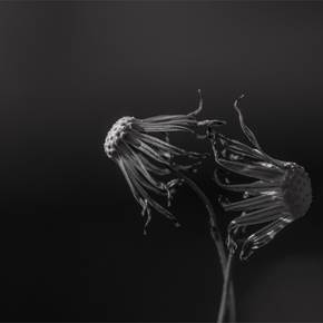 Medusas, original B&W Digital Photography by Fernando Pinho