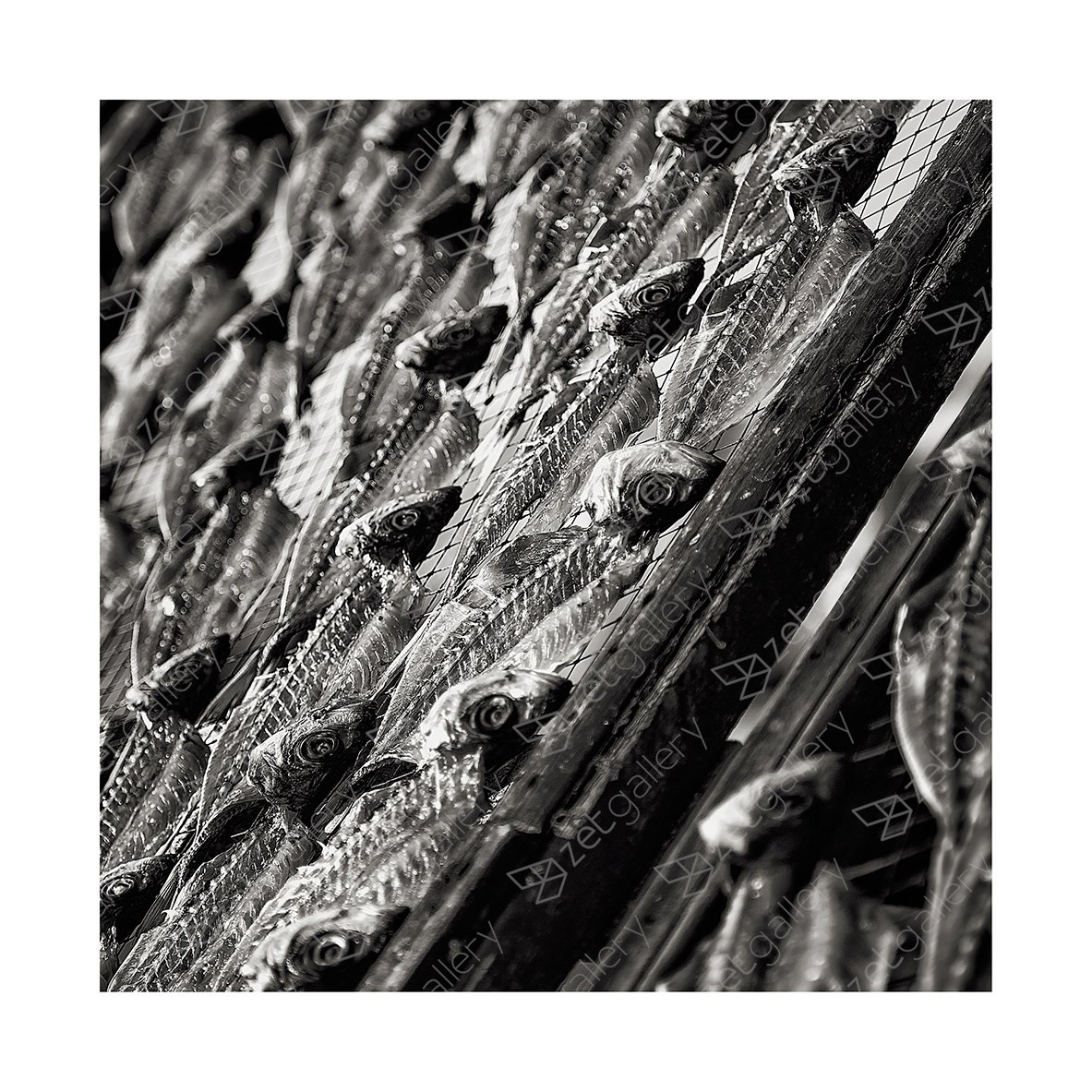 DRY FISH, original B&W Digital Photography by Jorge Viegas