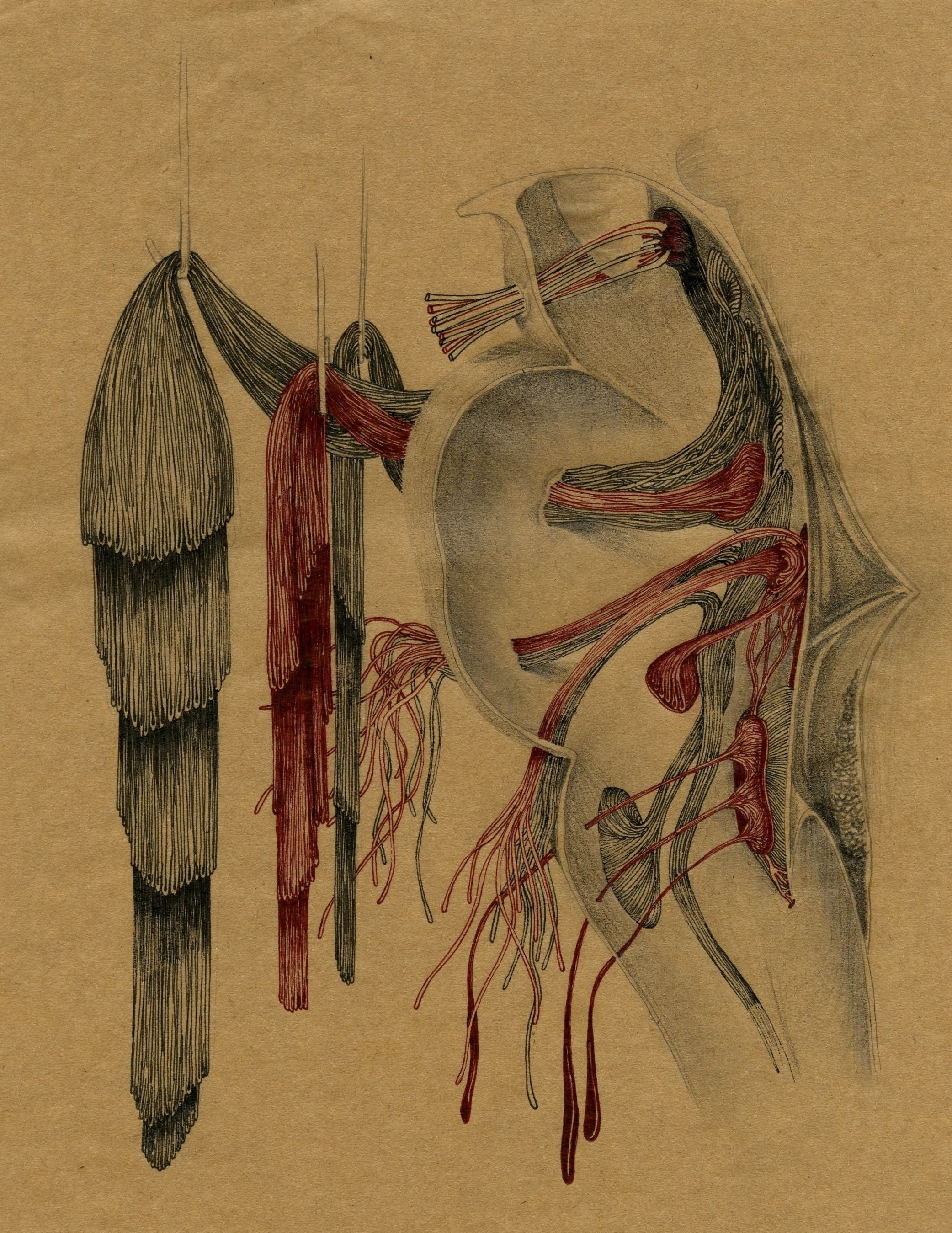 S.título ( anca ) , original Body Paper Drawing and Illustration by Lucy  Valente Pereira