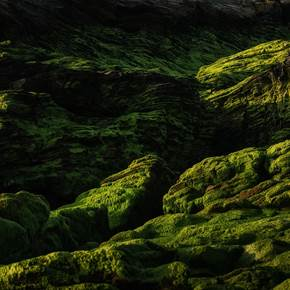 GRASSLAND, original Abstract Digital Photography by Ricardo Santiago Alves