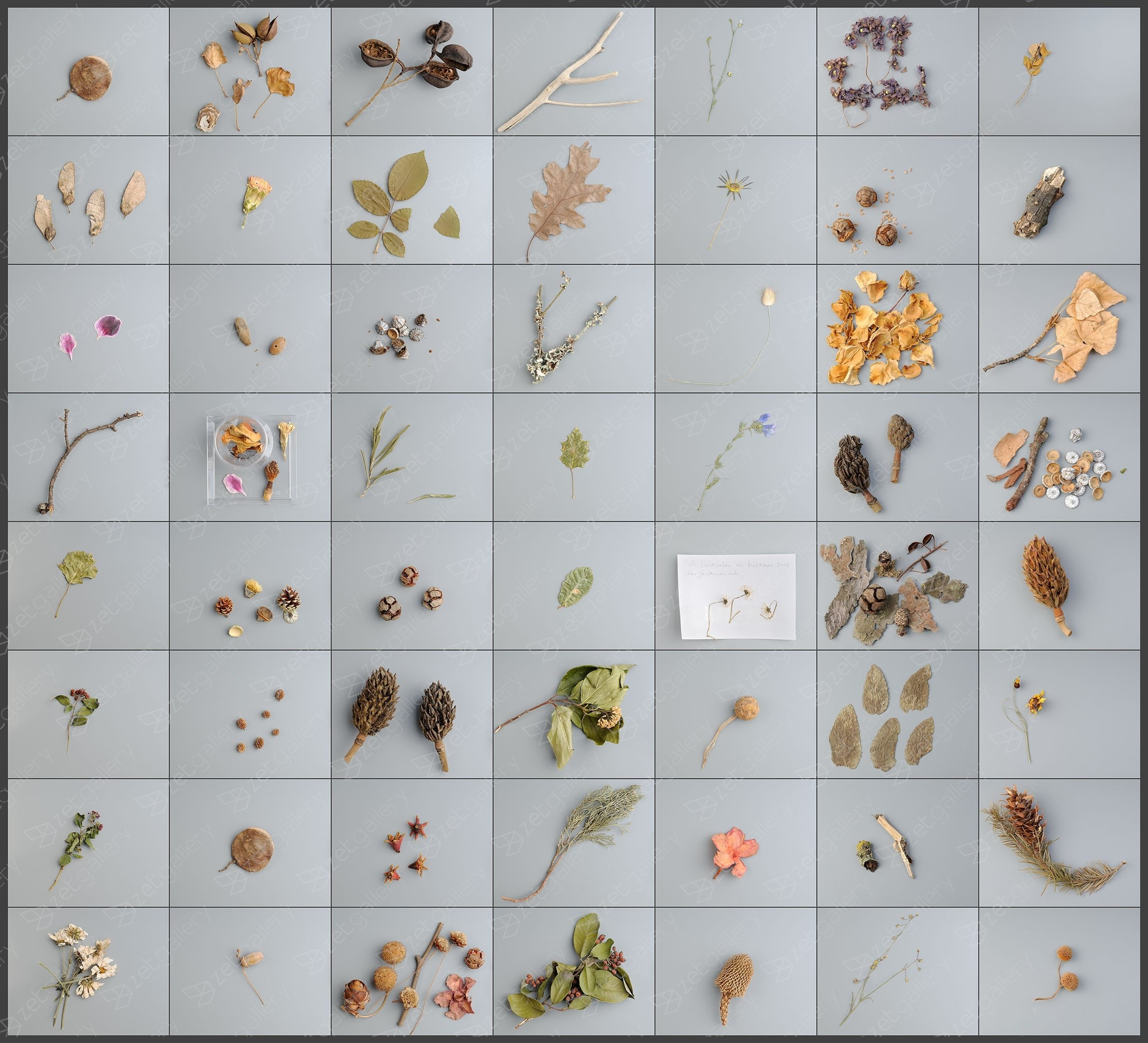 55 field collections + 1 intervention from Lisbon public gardens, original Still Life Digital Photography by António Coelho