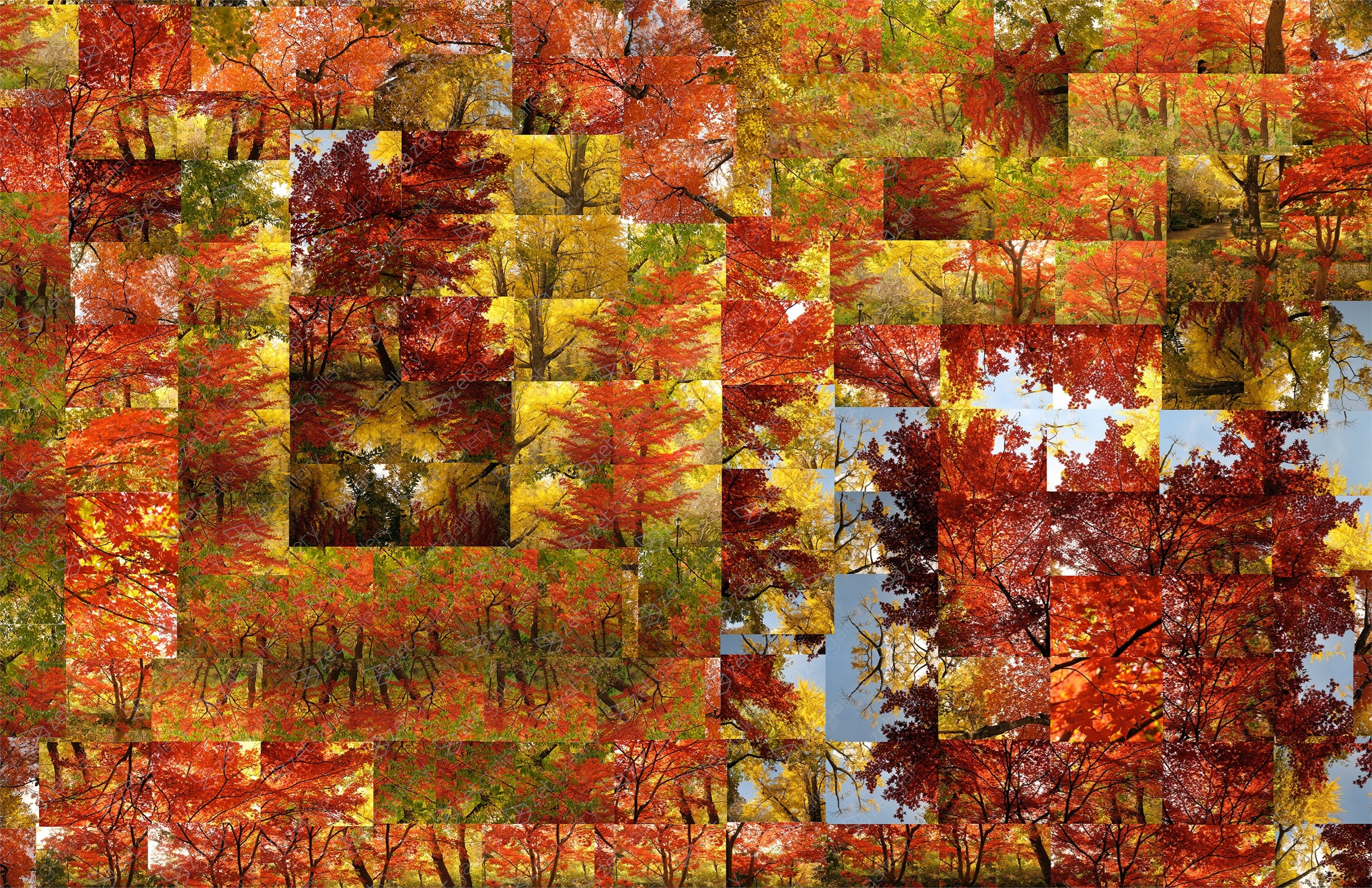 Fall - In depth Opus 1, original Nature Digital Photography by Shimon and Tammar Rothstein