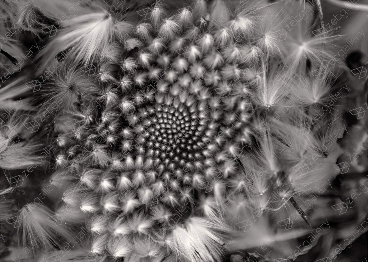Fibonacci, original B&W Digital Photography by Fernando Pinho