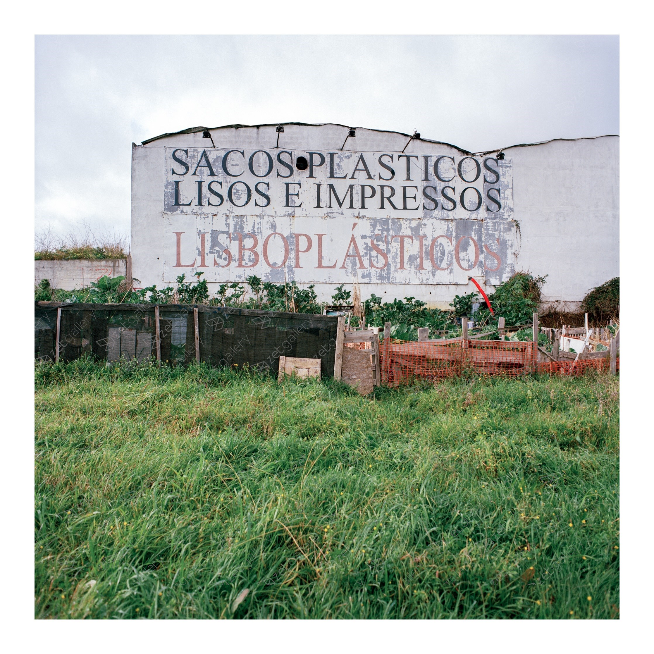 Untitled, original Landscape Analog Photography by João Pedro Machado