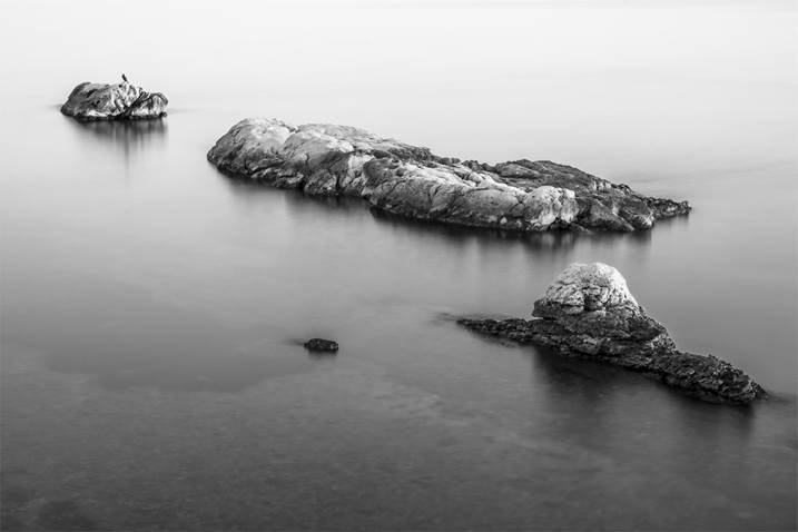 BIRD ON A ROCK II, Large Edition 1 of 5, original Abstract Digital Photography by Benjamin Lurie