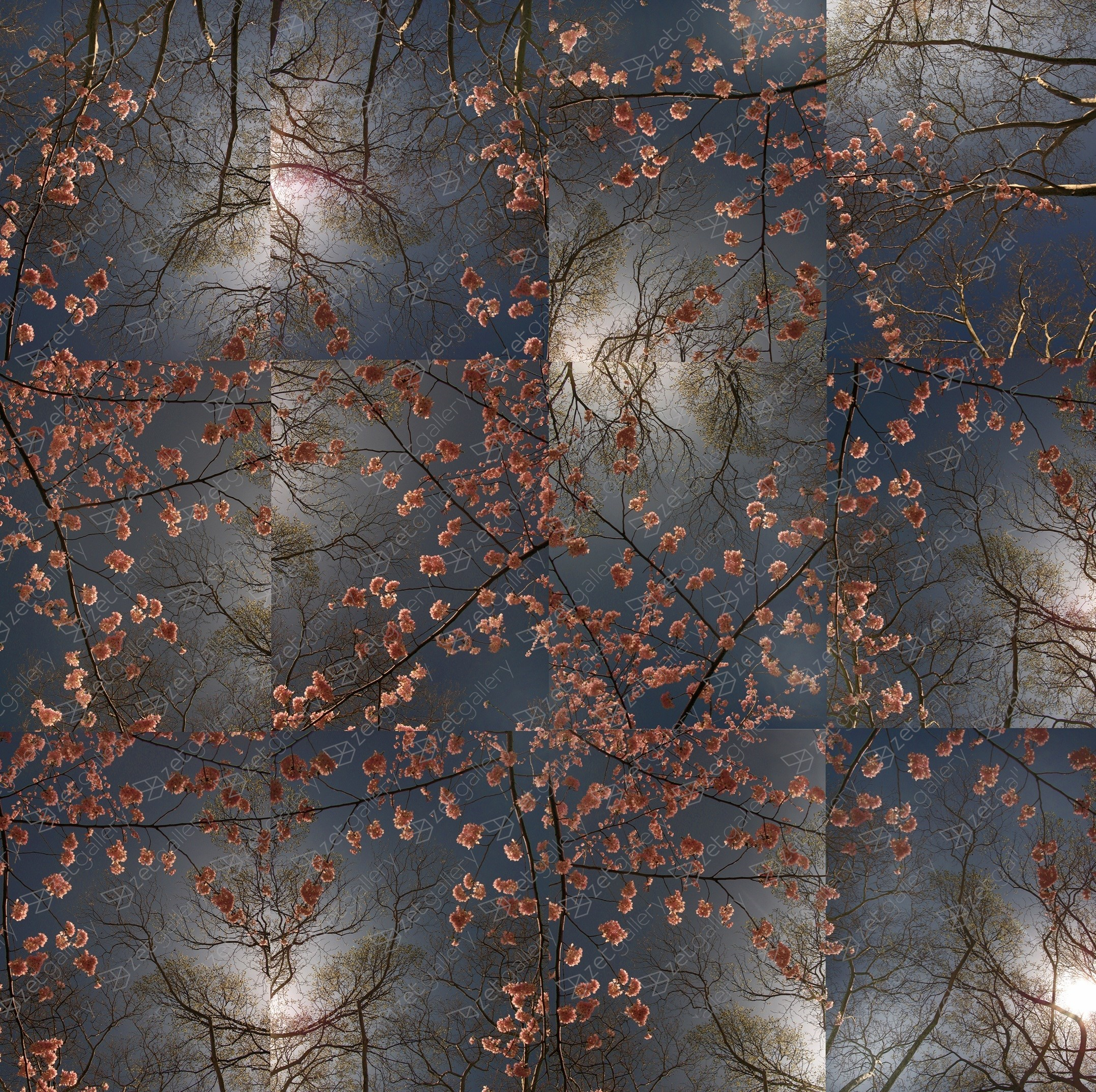 Early Spring - Cherry Blossom Bloom Opus 2, original Nature Digital Photography by Shimon and Tammar Rothstein