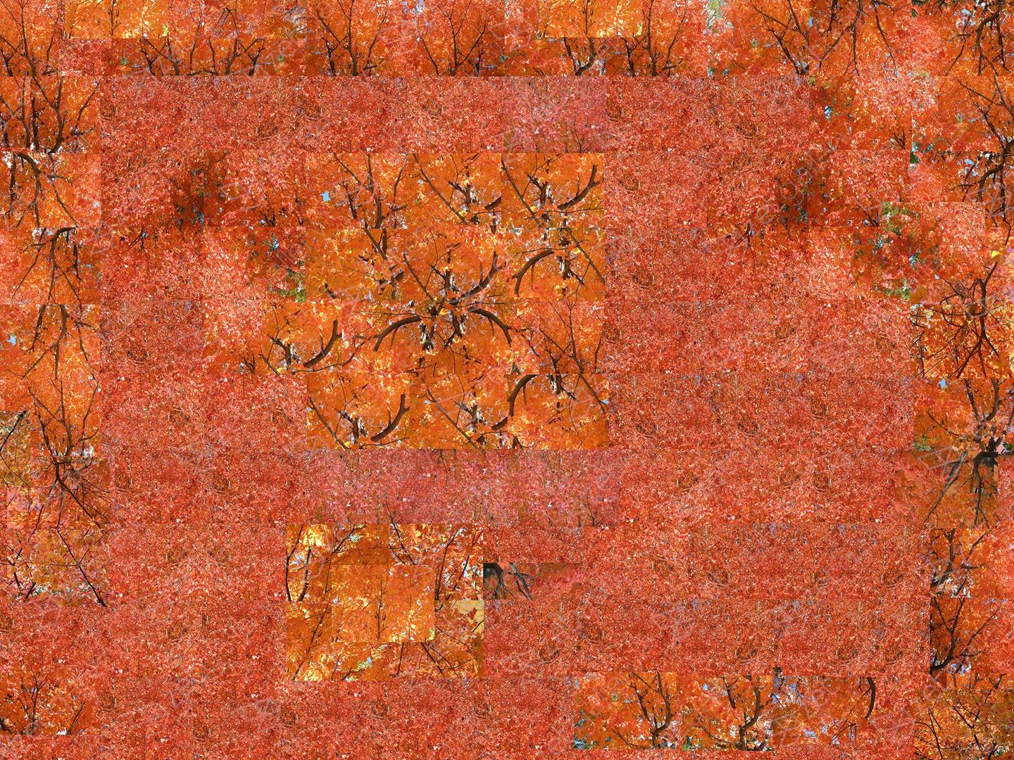 Fall - Red Opus 1, original   Photography by Shimon and Tammar Rothstein